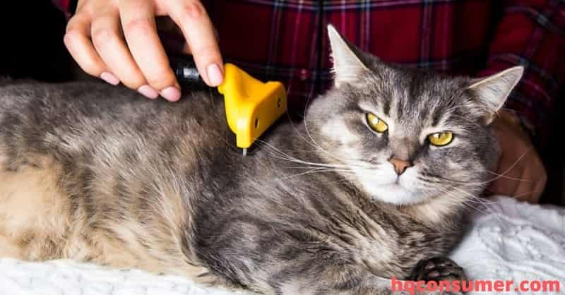 How To Get Rid Of Pet Urine Smell For Good